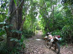 Through the jungle on motorcycle